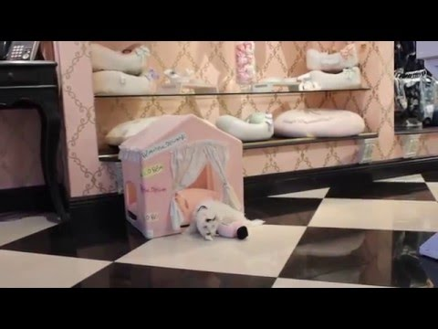 Maltese 2016 WE SHIP Teacup Puppies Store - teacuppuppiesstore - https://www.teacuppuppiesstore.com