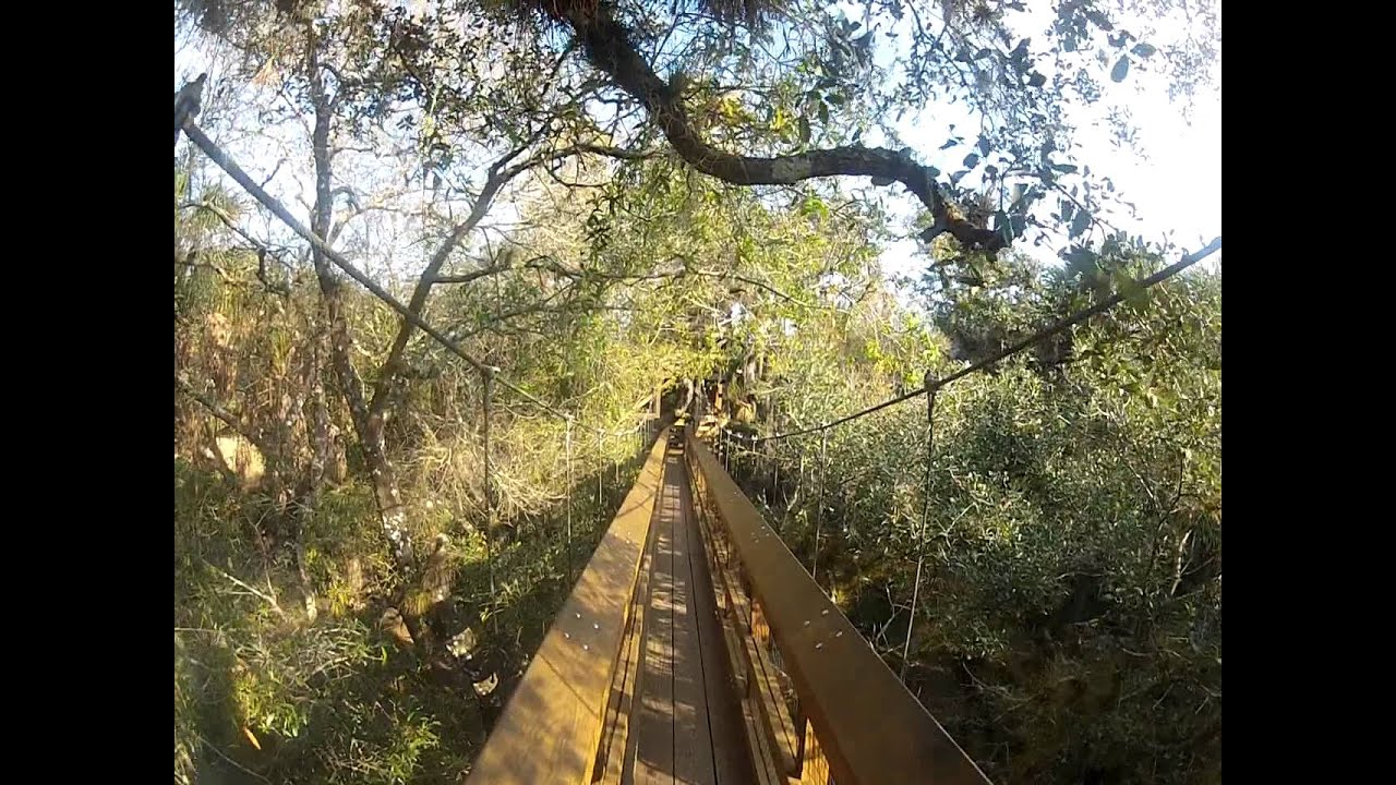 Myakka River State Park (Canopy and Observation Tower) - YouTube