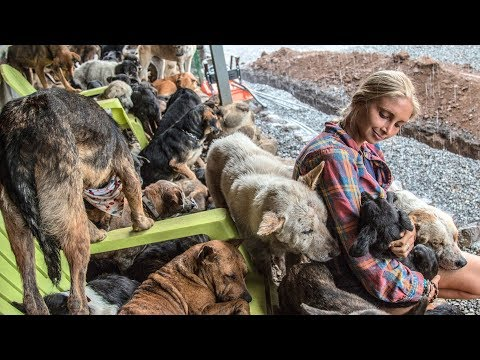 The 1100 Dogs of Territorio De Zaguates ♥ Everyone Needs Healing- Land Of Strays