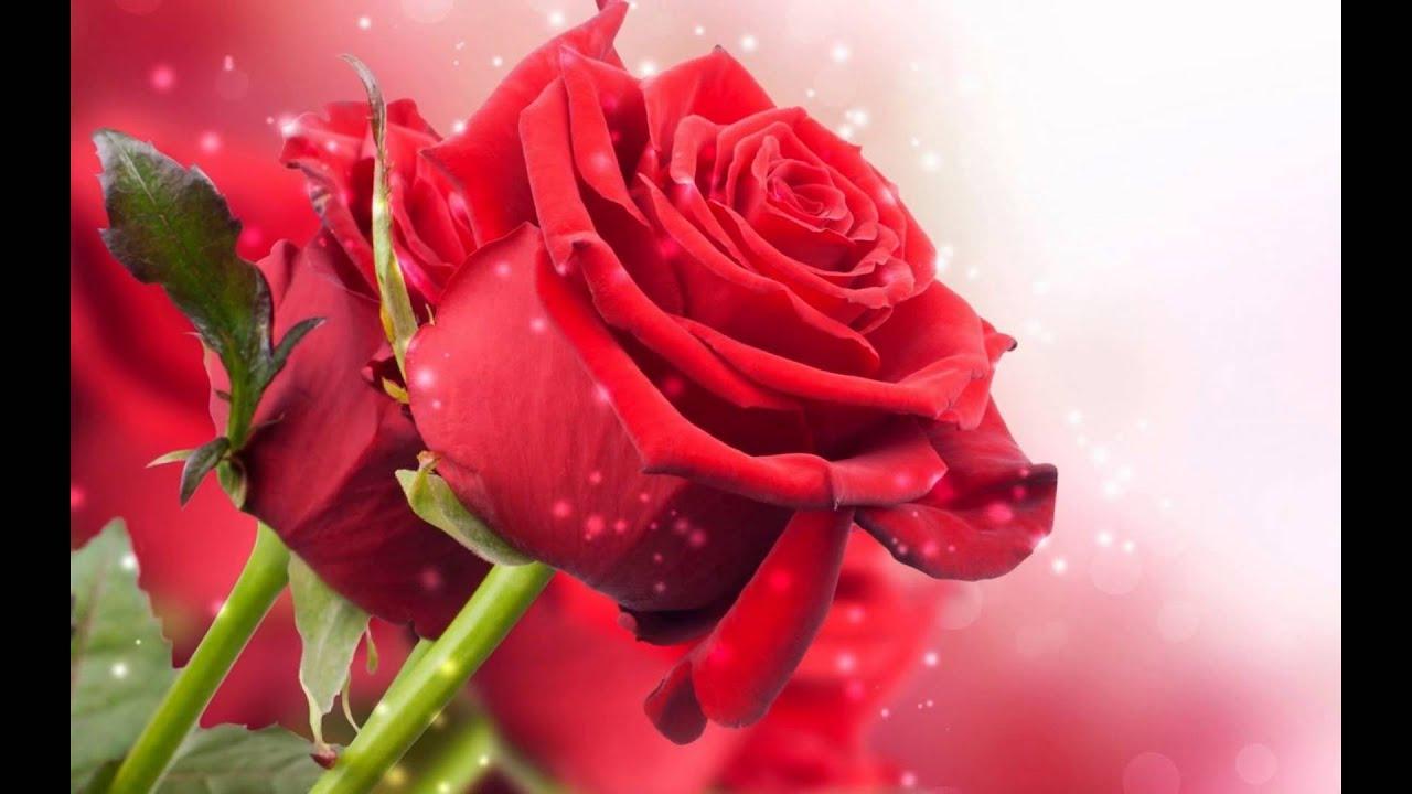 Video De Flores Preciosas