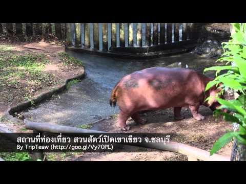 สถานที่ท่องเที่ยว สวนสัตว์เปิดเขาเขียว พัทยา ชลบุรี (Khao Kheow Open Zoo)