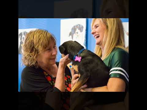CSUF Students Volunteer at Animal Shelter
