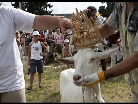 Goat Beauty Contest In Lithuania