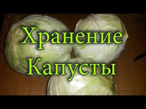 Как хранить капусту.