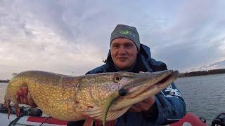 Щука КРОКОДИЛ!!!..К ЭТОМУ НЕВОЗМОЖНО ПРИВЫКНУТЬ! Рыбалка на спиннинг в Октябре