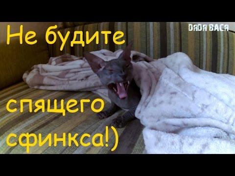 Забавные фото сфинксов. Обсуждение на LiveInternet