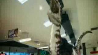 Primeval - Deinonychus - Happy Holiday