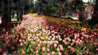 《 迎耒春色换人间》 潘寅林小提琴独奏 肖弗克钢琴伴奏