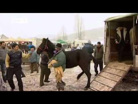 Romania/Germany: The Horse Epidemic | European Journal
