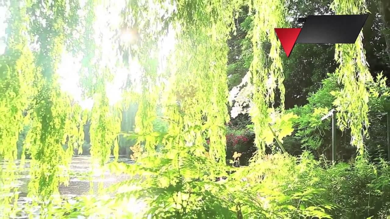 Il giardino segreto di monet youtube - Il giardino di monet ...