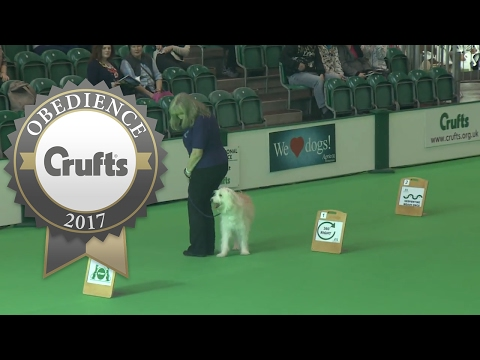Obedience - Inter-Regional Rally Level 2 - Part 1 | Crufts 2017
