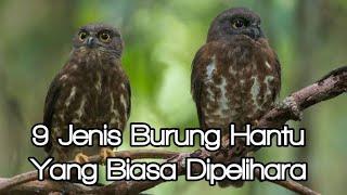 9 Jenis Burung Hantu Yang Biasa Dipelihara