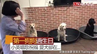 【生日片】小英唱生日快樂歌 3隻愛犬卻只想著...(翻攝自臉書 蔡英文 Tsai Ing-wen)