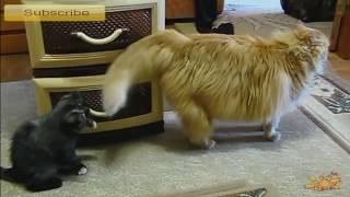 Забавные Игры Кошек ✦ Приколы Про Кошек ✦ Funny cats ✦ Funny Cat Games ✦ LUCKY