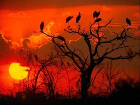 Musica Africana Bambanani Youtube