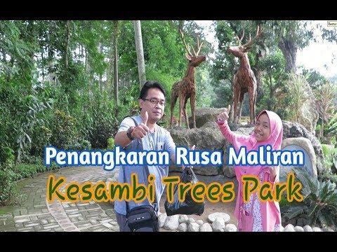 penangkaran-rusa-maliran-kesambi-trees-park-|-wisata-blitar