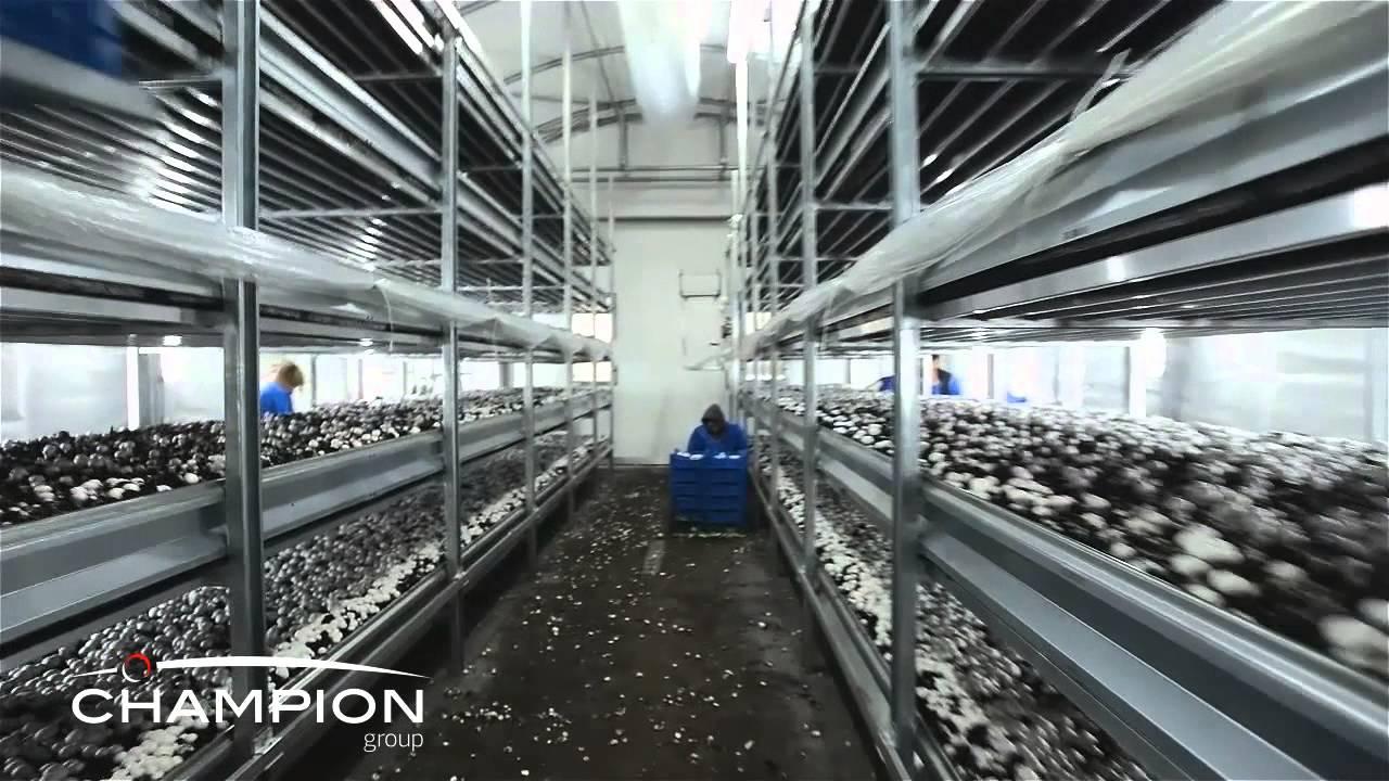 Mushroom Farming Growing Equipment Galvanized Growing