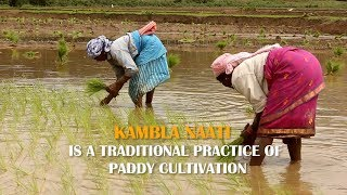 Wayanad Kambla Naati (കമ്ബള നാട്ടി വയനാട്) - Organic Paddy Cultivation in Wayanad, Kerala