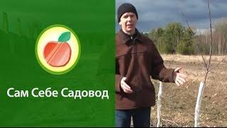 видео ландшафтный дизайн на 3-dots