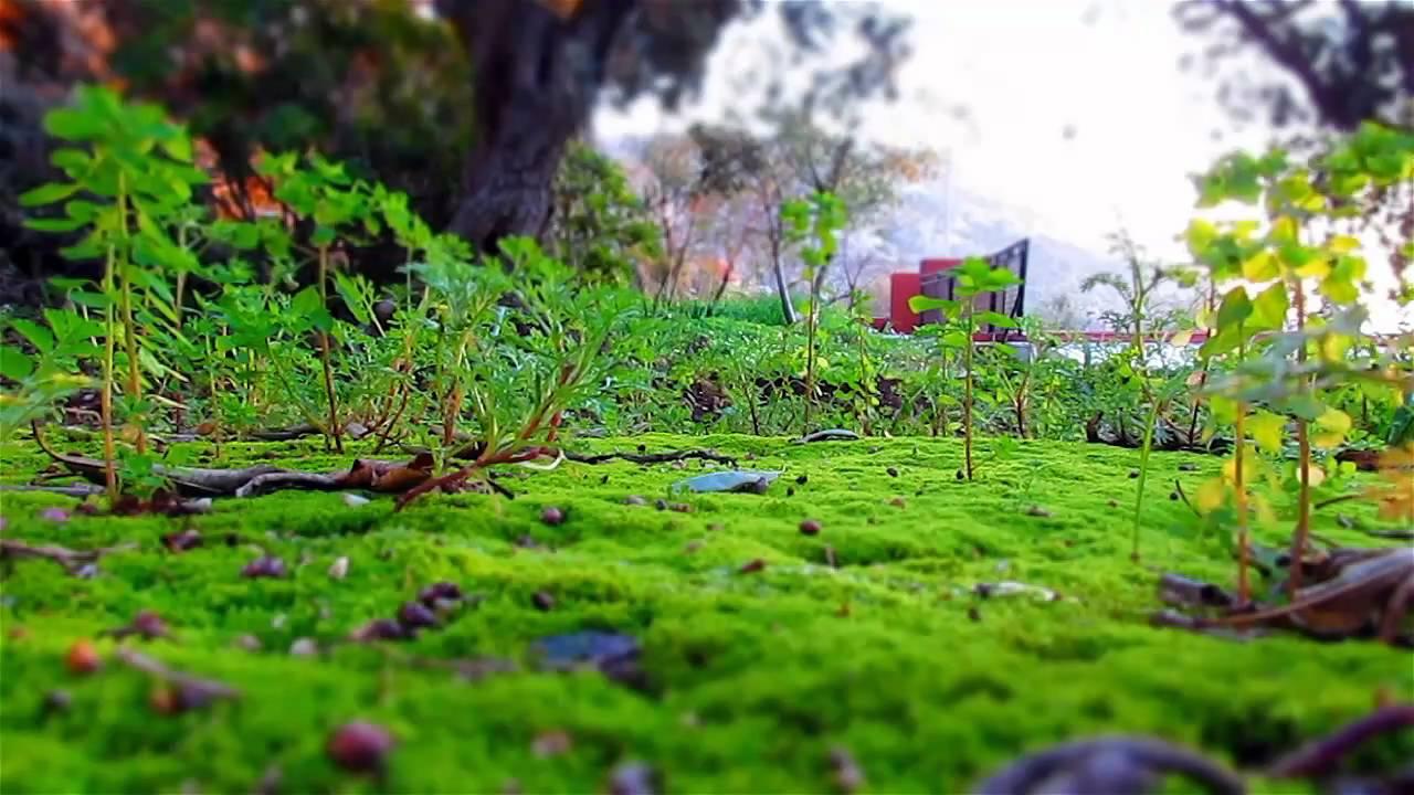 Microworld miniature effect