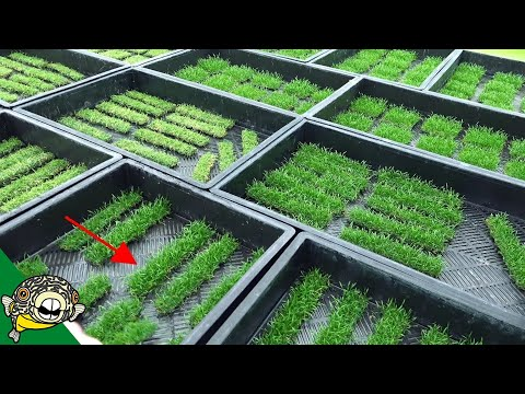 German Aquarium Plant Farm Tour! CRAZY!