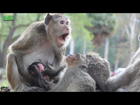 Mom get scare and worry about her newborn but she usually do bad on her baby, Nature Daily