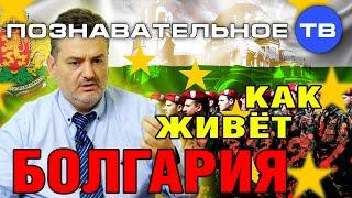 Как живёт Болгария (Познавательное ТВ, Пламен Пасков)