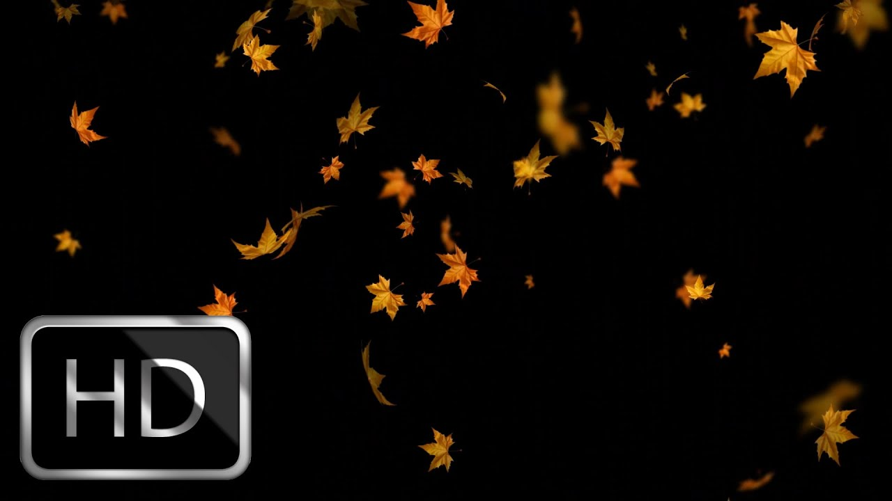 Free Animated Falling Leaves Wallpaper Falling Autumn Leaves Moving Background Loop Youtube