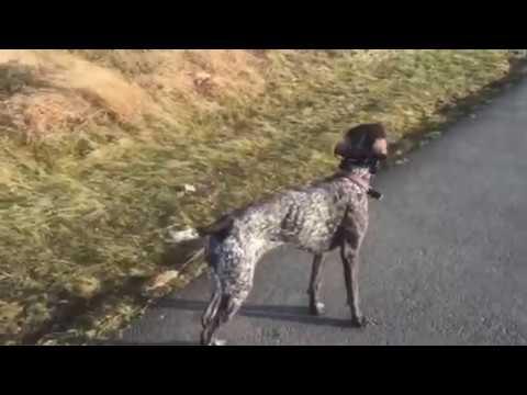 real-dog-training-...-my-plush-dog-training-facility!