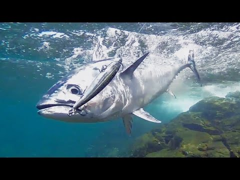 Sight Cast Fishing For Tuna Off Beautiful Island Headlands