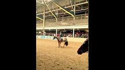 Champion Thoroughbred Ride Royal Winter Fair 2014