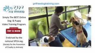 The Online Dog Trainer Review - Dogs Not Getting On, Ignoring Commands