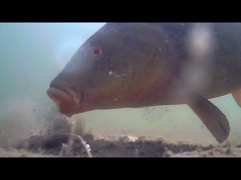 Very cool: Tench takes bait underwater. Fishing in Germany. Линь рыбалка на бойлы в Германии.