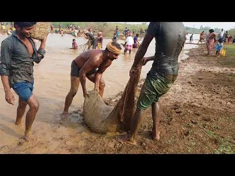 Fish catching in Tamil nadu sivagangai dist sv mangalam 2018