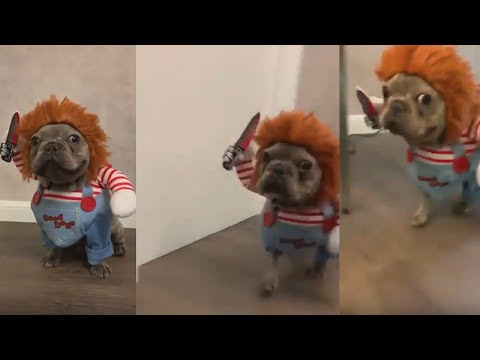 The Love Doctors - Dog Chucky From Child's Play Costume Is Awesome