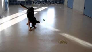 Daisy A German Shepherd Available For Adoption At The Wisconsin Humane Society