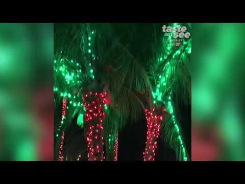 Christmas lights at the florida botanical gardens taste - Florida botanical gardens christmas lights ...