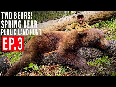 TWO BEARS DOWN! | BEAR HUNT 4K | EP 3 | PUBLIC LAND