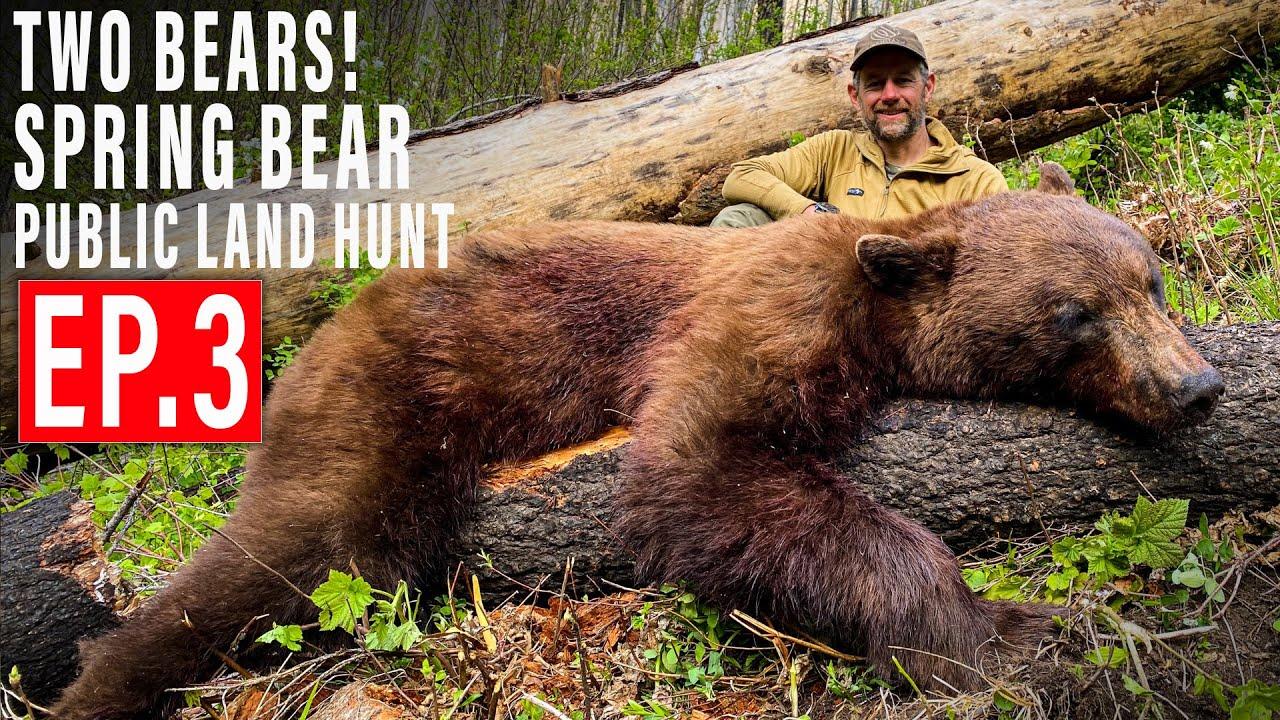 Download TWO BEARS DOWN!   BEAR HUNT 4K   EP 3   PUBLIC LAND