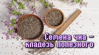 СЕМЕНА ЧИА – кладезь кислот ОМЕГА-3 и других ПОЛЕЗНЫХ ВЕЩЕСТВ