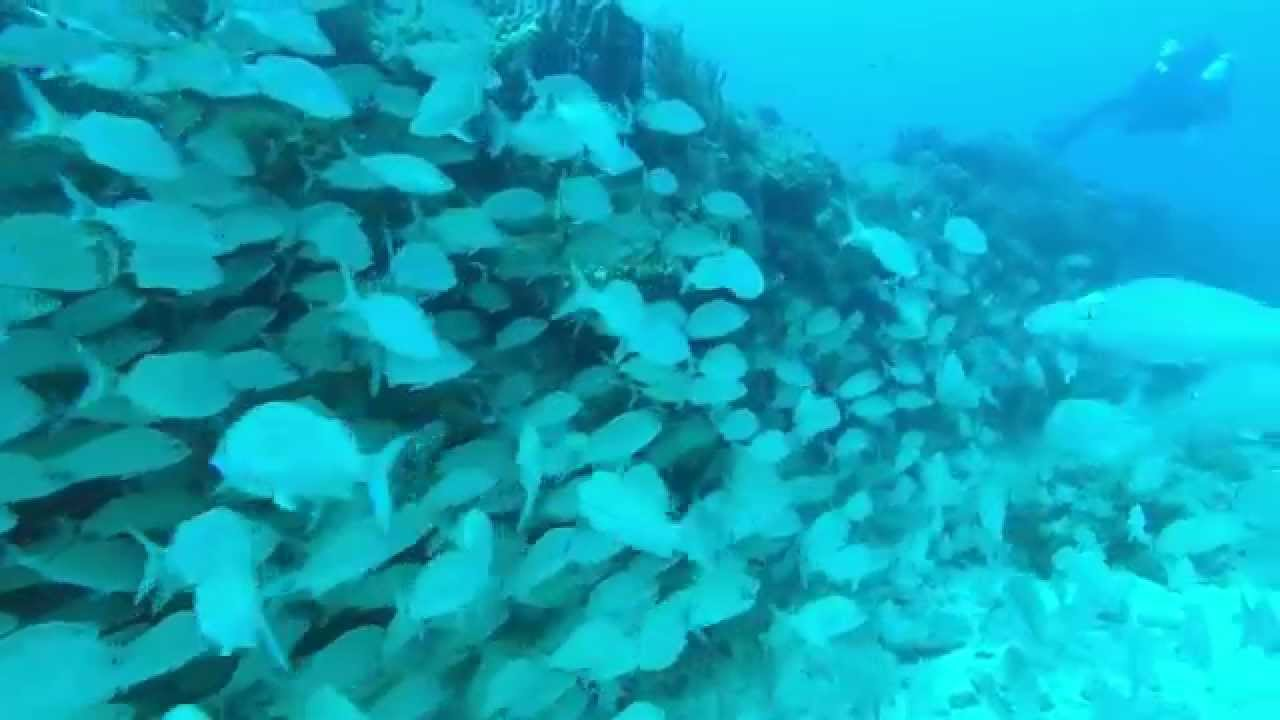 SCUBA Diving West Palm Beach With Paradise Below Diving