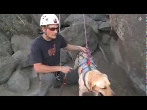 Ruffwear: How To Fit The Doubleback Harness To Your Dog | AvidMax