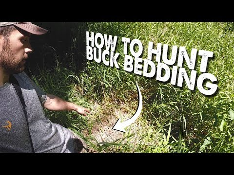 HOW TO HUNT MARSH BUCK BEDDING! - The Hunting Public