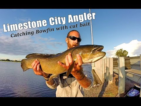 Catching Bowfin/Dog Fish (with Cut Bait) Kingston, Ontario