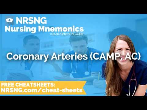 Coronary Arteries CAMP, AC Nursing Mnemonics, Nursing School Study Tips
