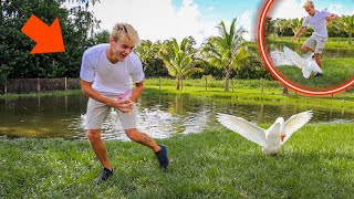 I got ATTACKED By My PET GOOSE!! *animal update*