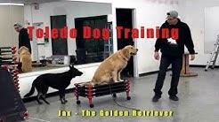 Dog Training Toledo OH - Dog Obedience Classes - Glass City K9 LLC - Recall & Place Training