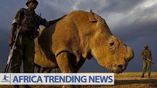 "(2nacheki""African News"")Africa's Last Male Northern White Rhino Dies in Kenya"