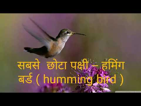 world's largest, smallest and fastest living organism in hindi