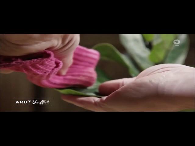 ARD-Buffet: Frühjahrskur für Zimmerpflanzen - Abstauben und Entkalken für mehr Blattglanz